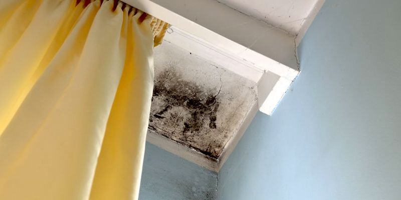 Sell Your New Orleans House with Mold to Big Easy Buyers